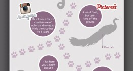 Infografía: ¿Y sí las redes sociales fuera animales?