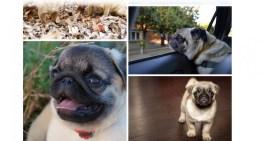 Las mascotas también tendrán sus videos en Google Fotos