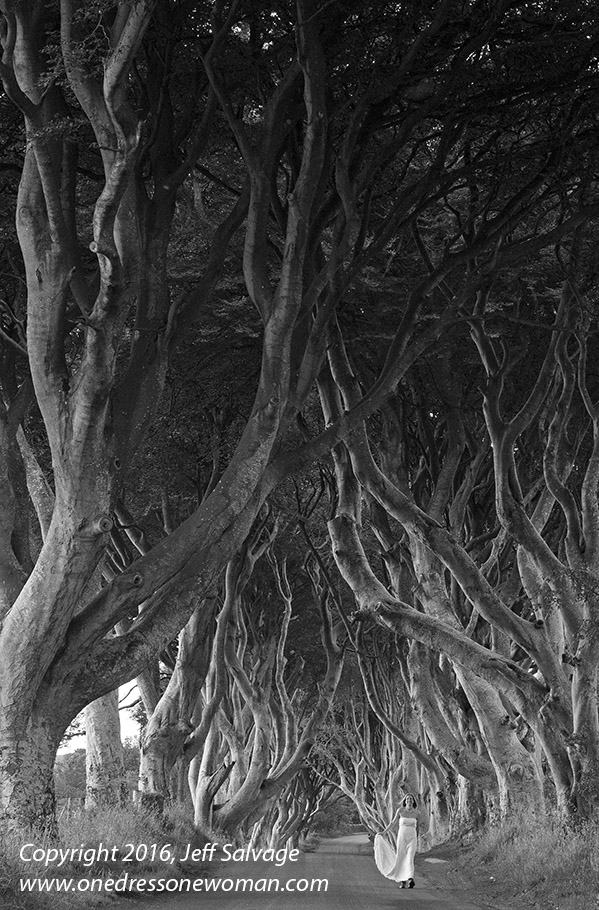 Dark Hedges - 02