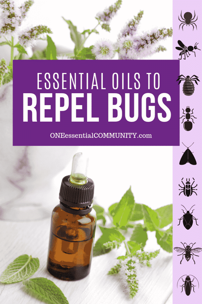 Top 10 Essential Oils That Repel Bugs Bug Spray Recipe Diffuser