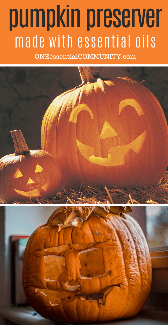 rotten jack o lantern on the top, preserved jack o lantern pumpkin on the bottom after using essential oil pumpkin preserver spray
