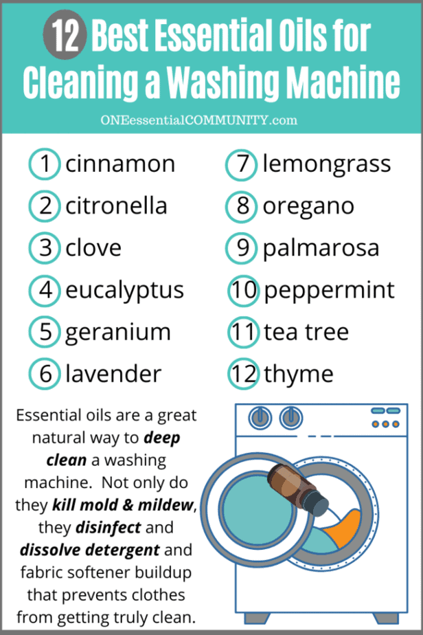 12 best essential oils for cleaning washing machine- cinnamon, citronella, clove, eucalyptus, geranium, lavender, lemongrass, oregano, palmarosa, peppermint, tea tree, thyme -- Essential oils are a great natural way to deep clean a washing machine. not only do they kill mold & mildew, they disinfect and dissolve detergent and fabric softener buildup that prevents clothes from getting truly clean.