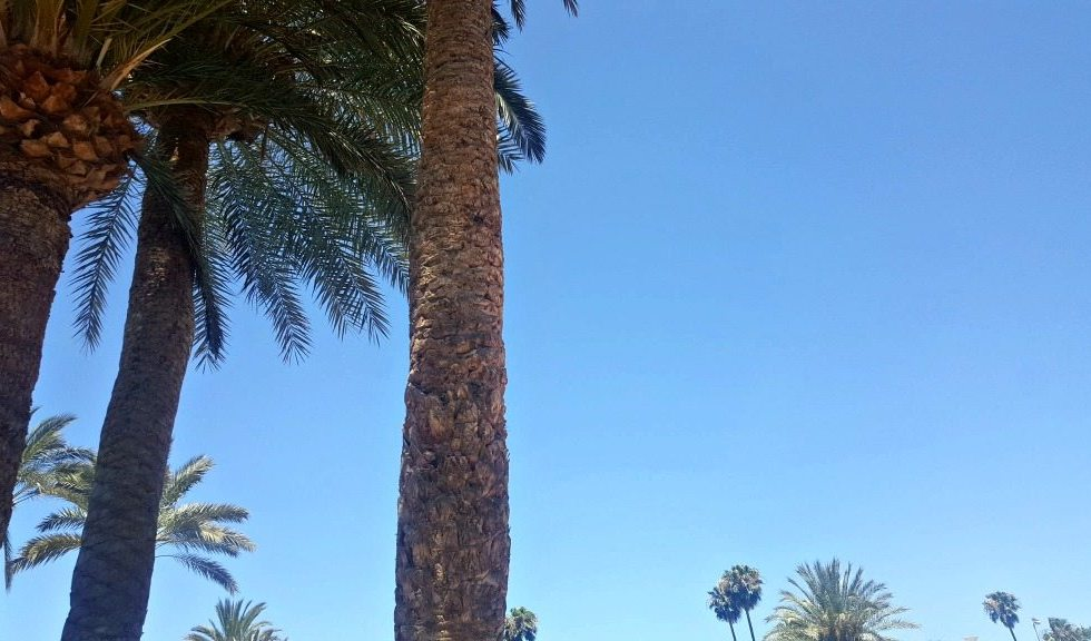 palm trees against a blue sky in gran canaria