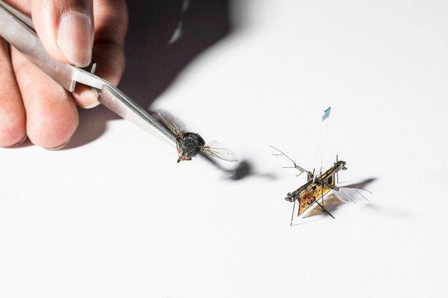 Роботизированное насекомое учится летать на базе лазерных лучей' data-widget='image