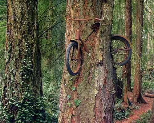 bike-in-tree