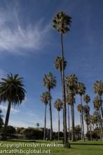Palm trees, palm trees