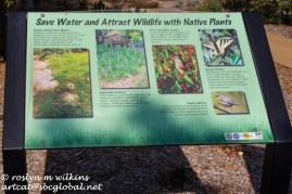 Native wildlife