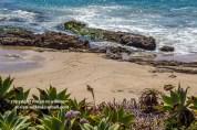 laguna-beach-042016-164-C-600px