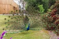 arboretum-051416-032-C-600px