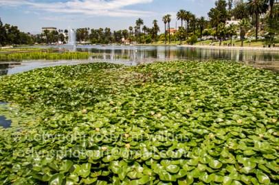 lotus-festival-071517-223-C-500px