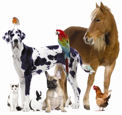 cats dogs horse bird