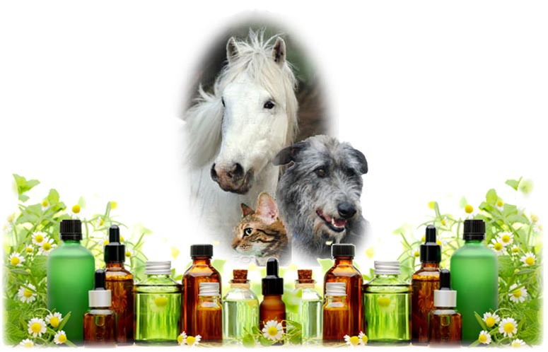 dog cat horse oils lrg