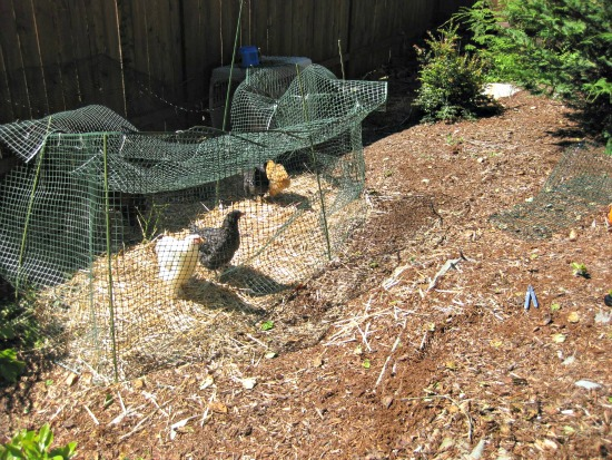 new chicken coops