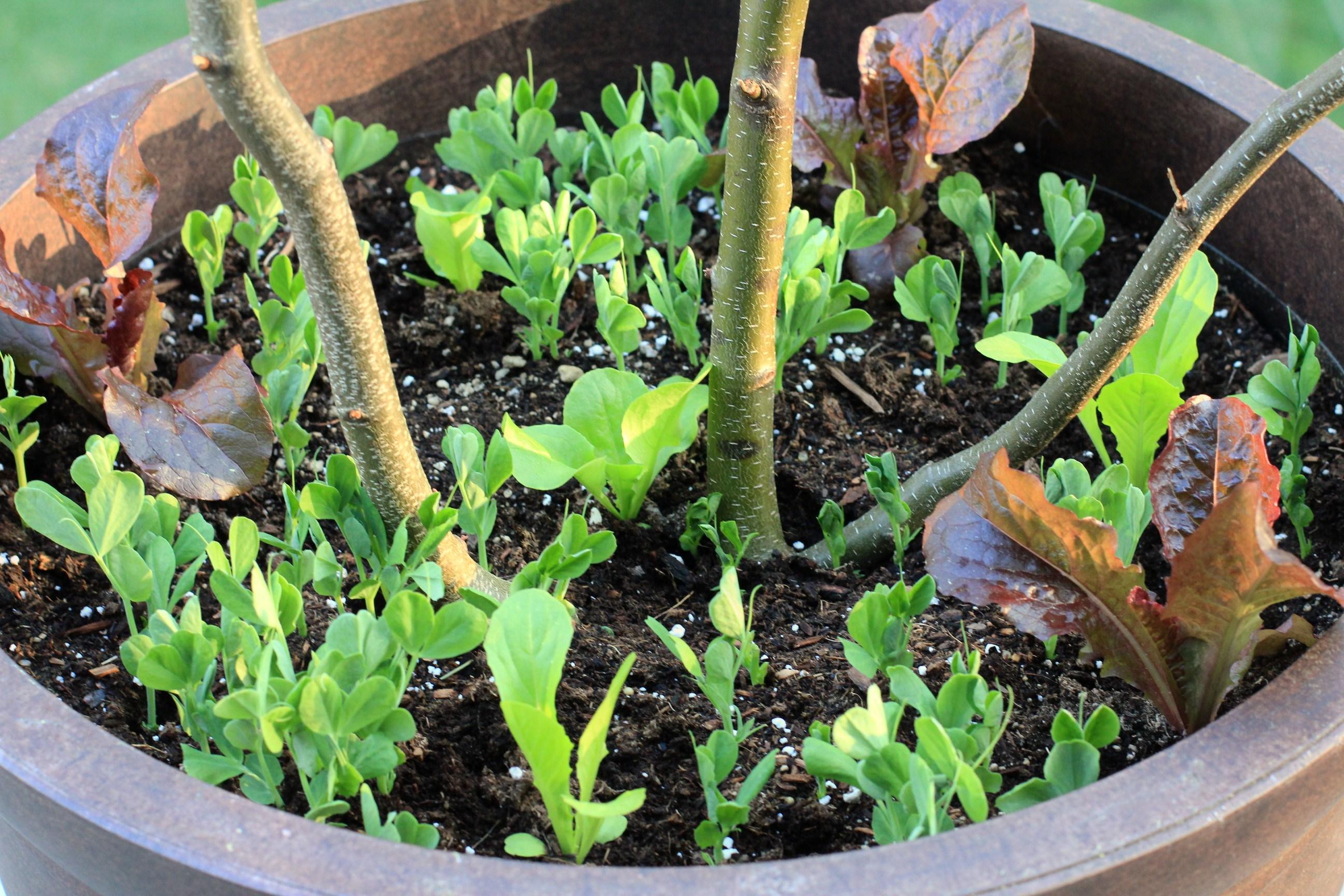 10 ideas del jardín para robar de Grecia - Gardenista