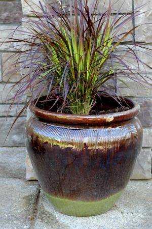 Mavis Garden Blog Ideas For Summer Container Gardening