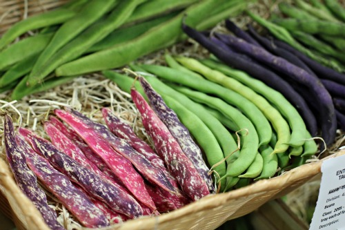 picture of heirloom beans