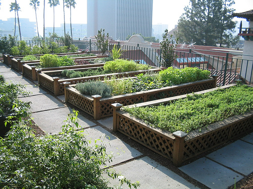 Photo Credit. Herb Garden On A Southern California Rooftop.