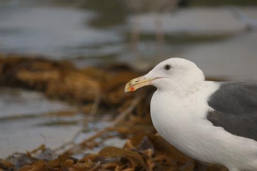 sea birds salt creek beach california