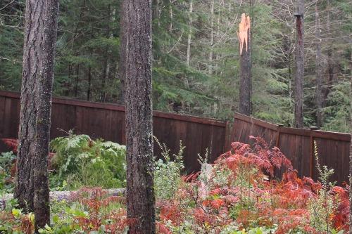 tree falls on fence