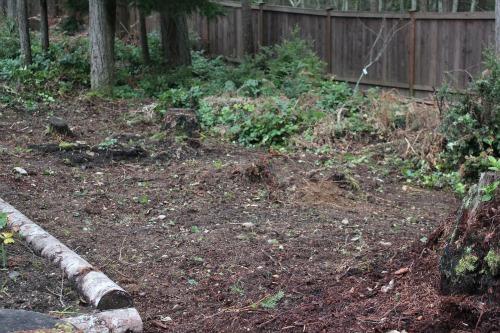 backyard with stumps