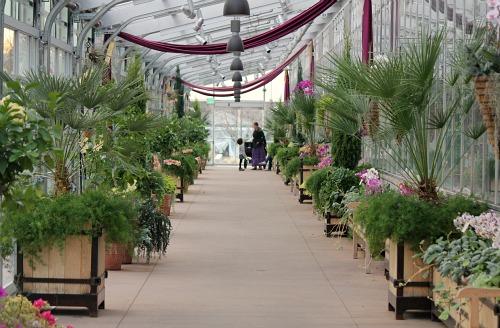 Denver Botanic Museum Orchid Showcase - One Hundred Dollars a Month