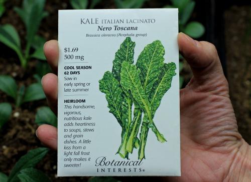 kale seed packet