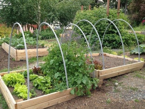 raised garden beds with hoops