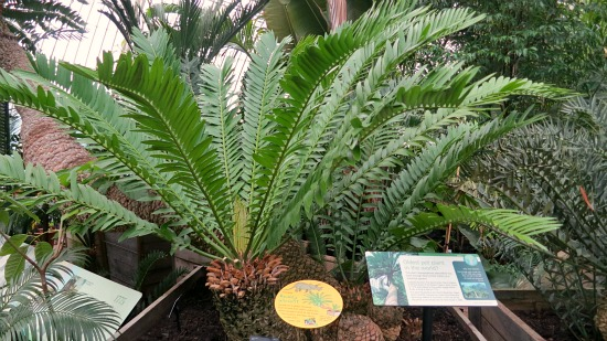 oldest pot plant kew gardens
