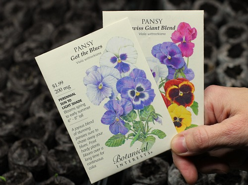 purple pansy seeds