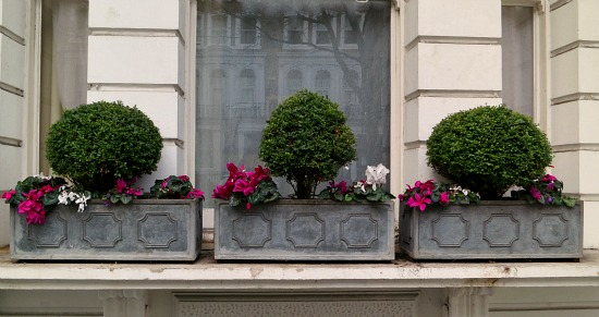 window box designs boxwoods