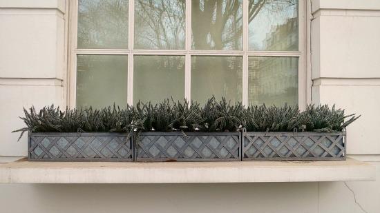 window box inspiration designs
