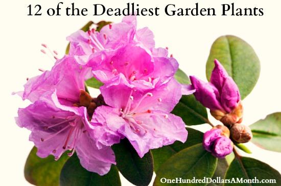12 of the Deadliest Garden Plants