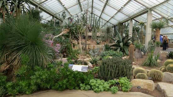 Kew Royal Botanic Gardens - Succulents