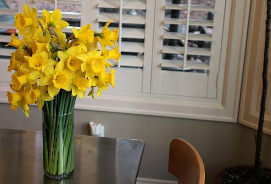 daffodils tall vase