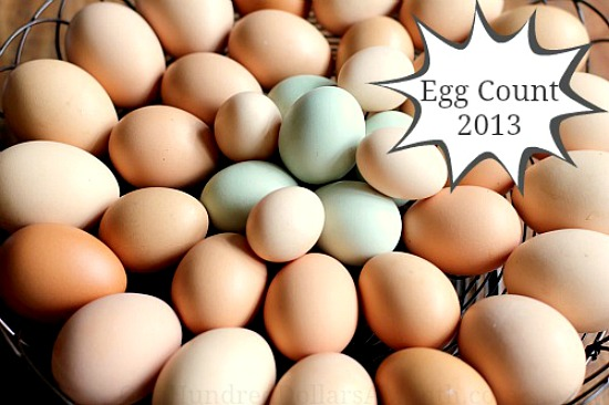 egg-count-2013