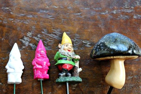 garden gnome plant pics