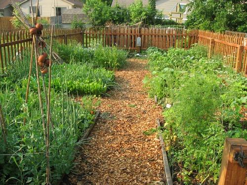 raised-garden-beds-1