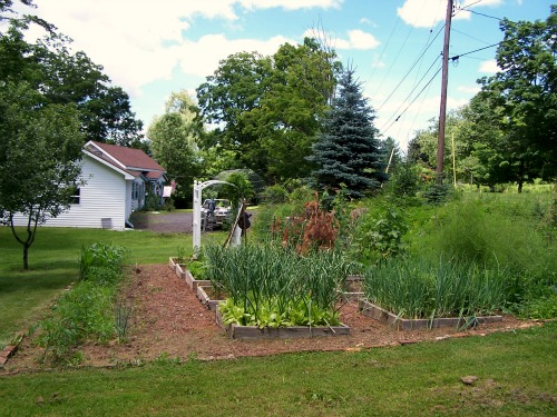 raised-garden-beds-gardening