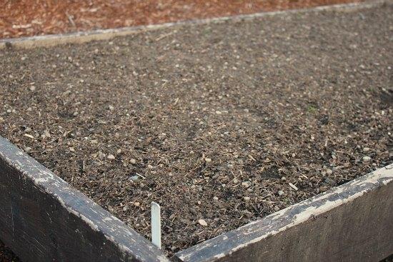 DIY Raised garden beds carrots