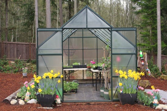 Growing Vegetables in a Greenhouse , gardening, mavis, magnum glass greenhouse,  Spinach, Lettuce, Basil