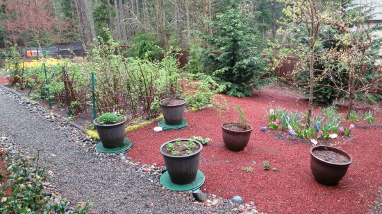 costco brown pots herb garden