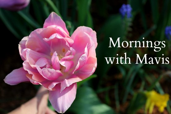 double pink tulip