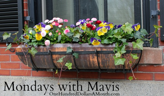 flowers in window boxes mornings with mavis