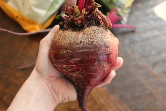 giant beet