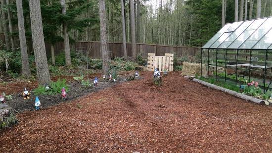glass greenhouse  wooded backyard