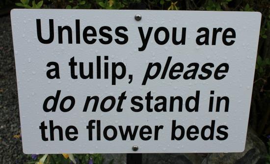 tulip sign