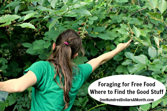 Foraging for Free Food – Where to Find the Good Stuff