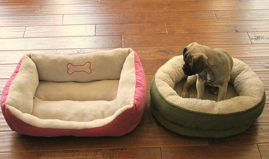 Is There A Good Way to Introduce a Dog to a New Bed