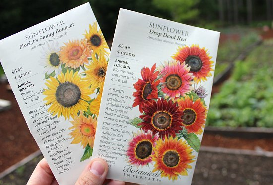 botanical interests sunflower seeds