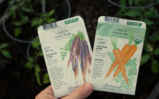 purple carrot seeds